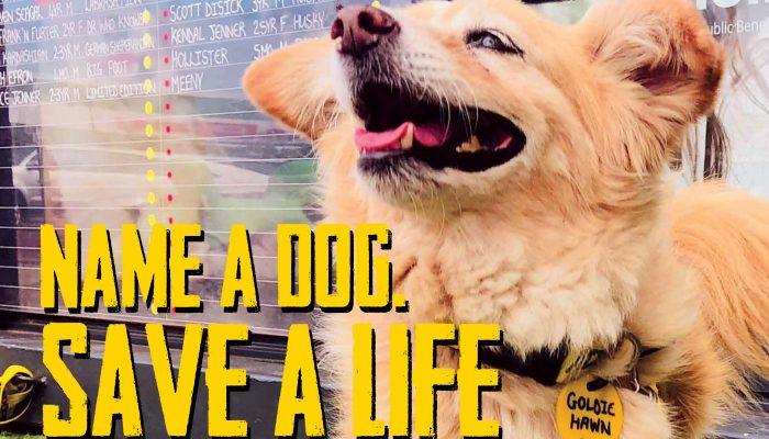 Oscars Arc | Name a dog. Save a life.