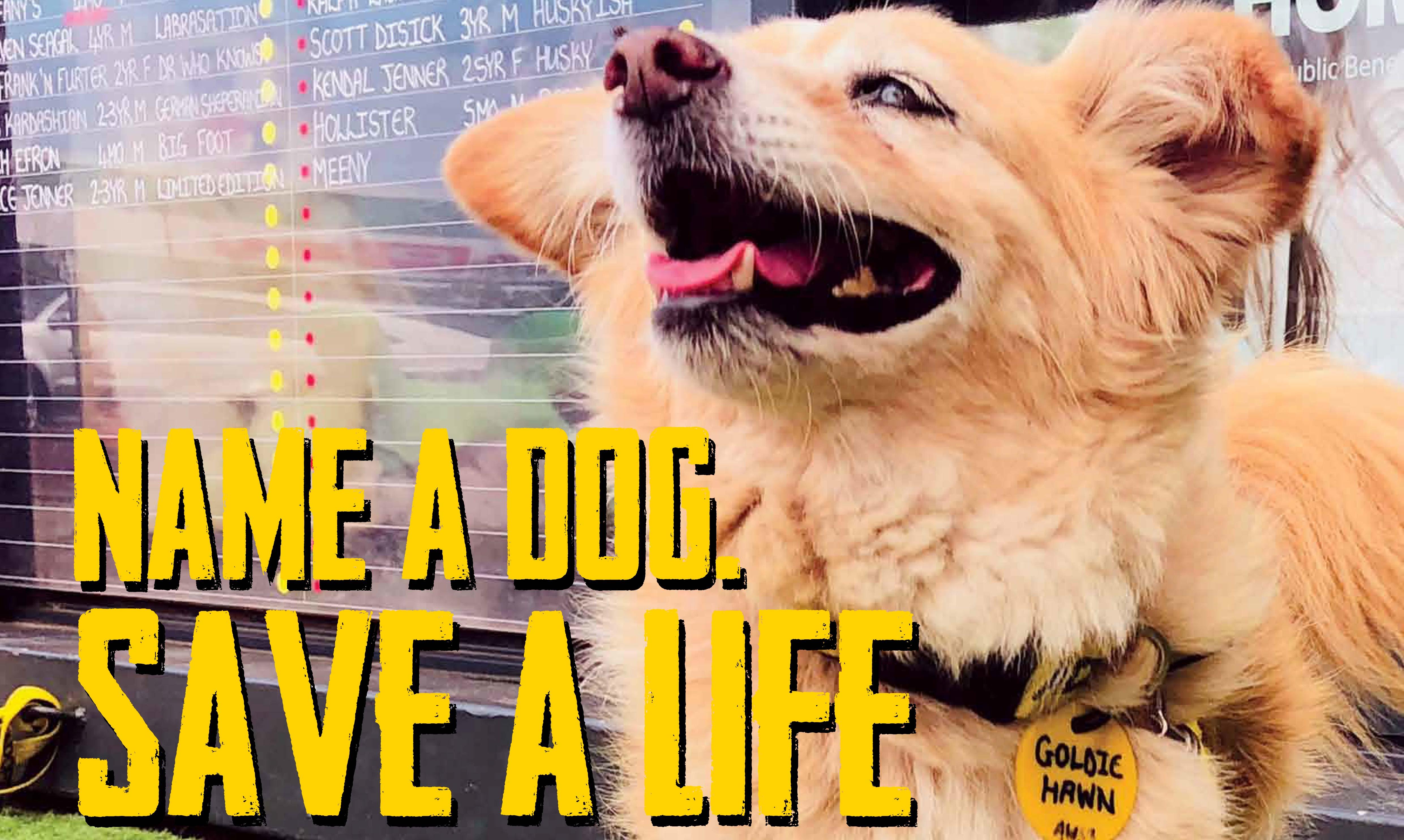 Oscars Arc   Name a dog. Save a life.